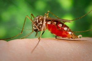 Укус комара.