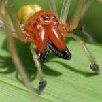 Жовтий павук Сак.
